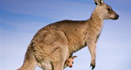 Effectiveness of Kangaroo Mother Care for Premature Babies